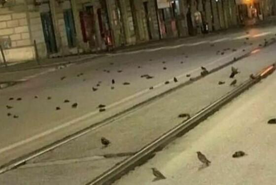 roma uccelli morti